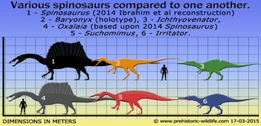 spinosaur-size-comparison.jpg