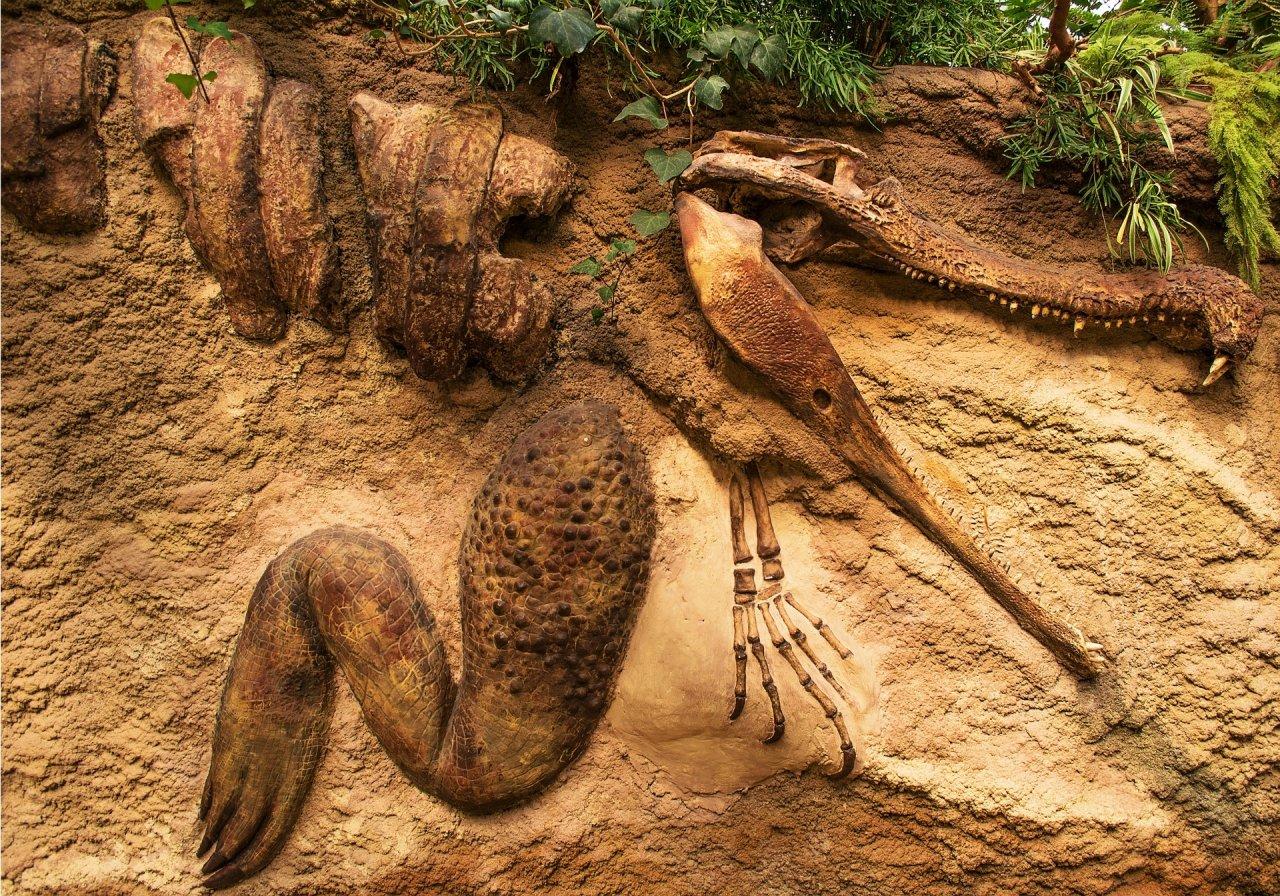 fossil-635079_1920-9ivmd7qt48.jpg