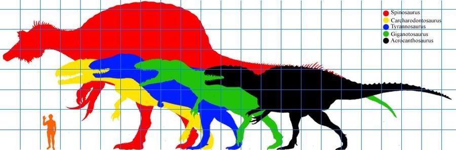 Spinosaurus Vs Carcharodontosauru S | Dinosaur Home