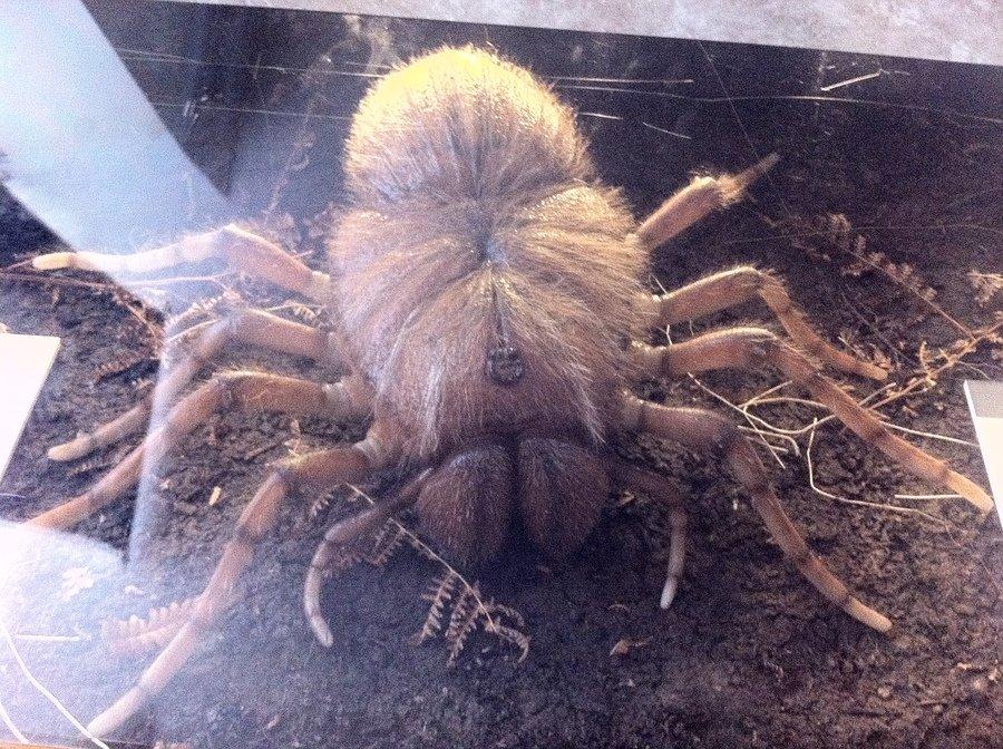 Megarachne, the Giant Spider That Wasn't – Laelaps