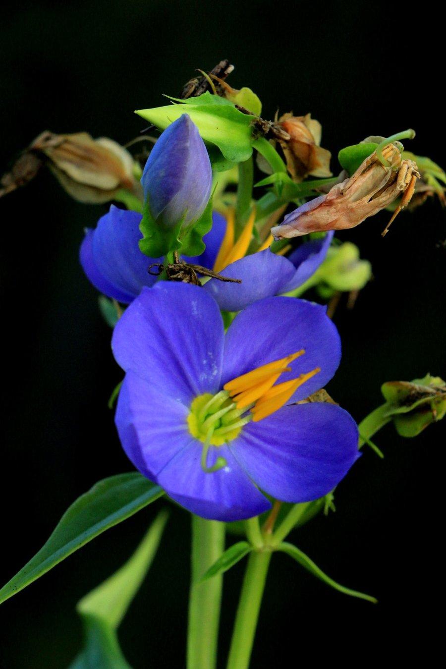 Voting For September October Flower Of The Month Flowers