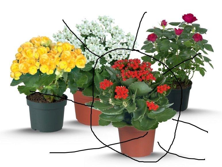 Charmant Flowering House Plants Identification