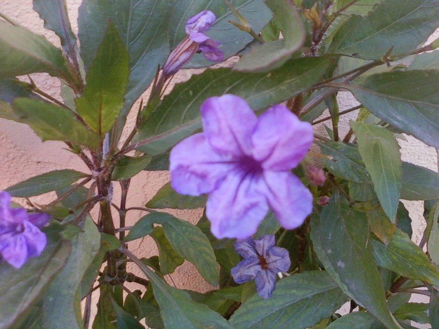 green leaves purple flowers - photo #19