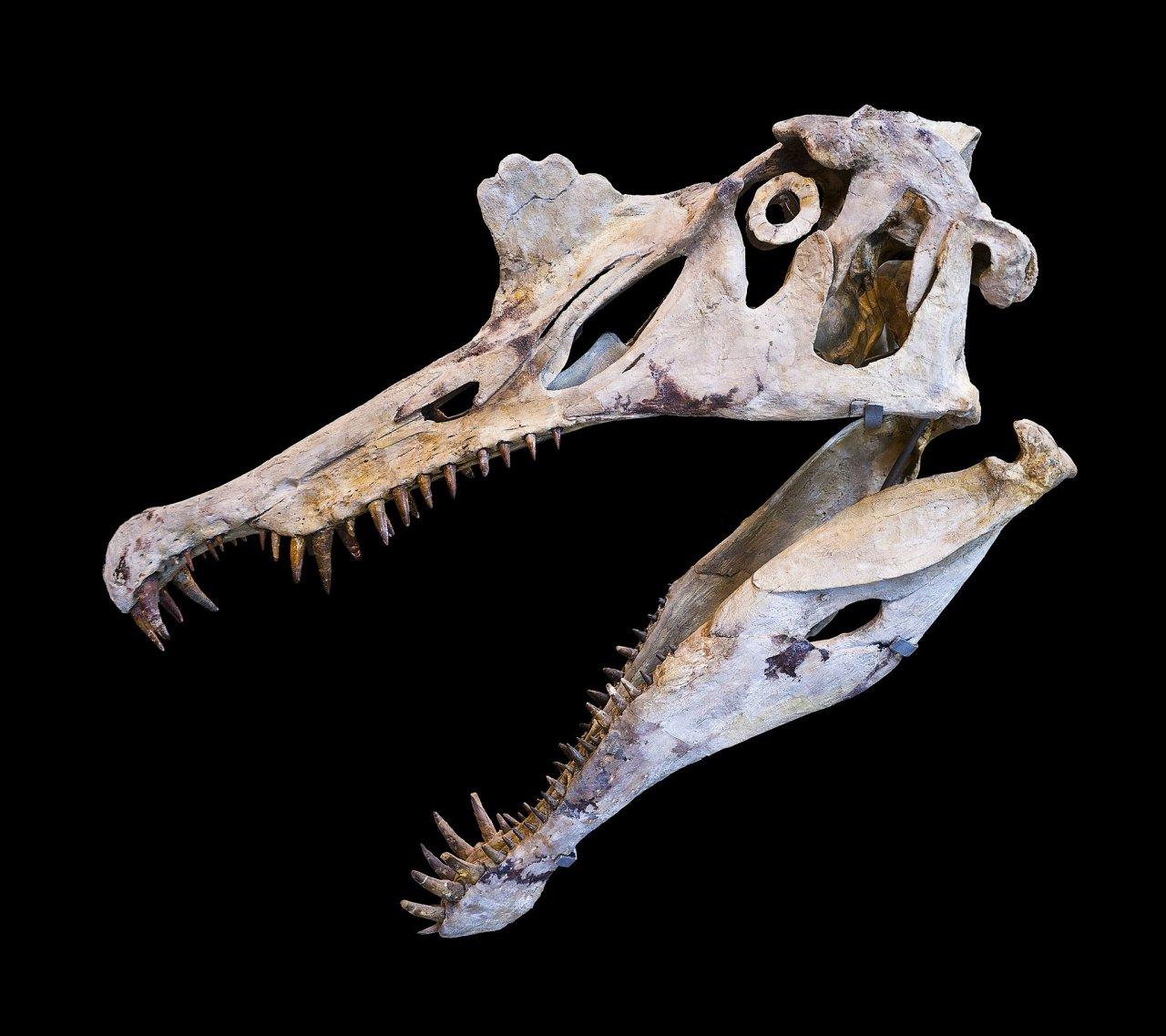 2048px-Spinosaurus_Crane-26y9z9jk8j.jpg