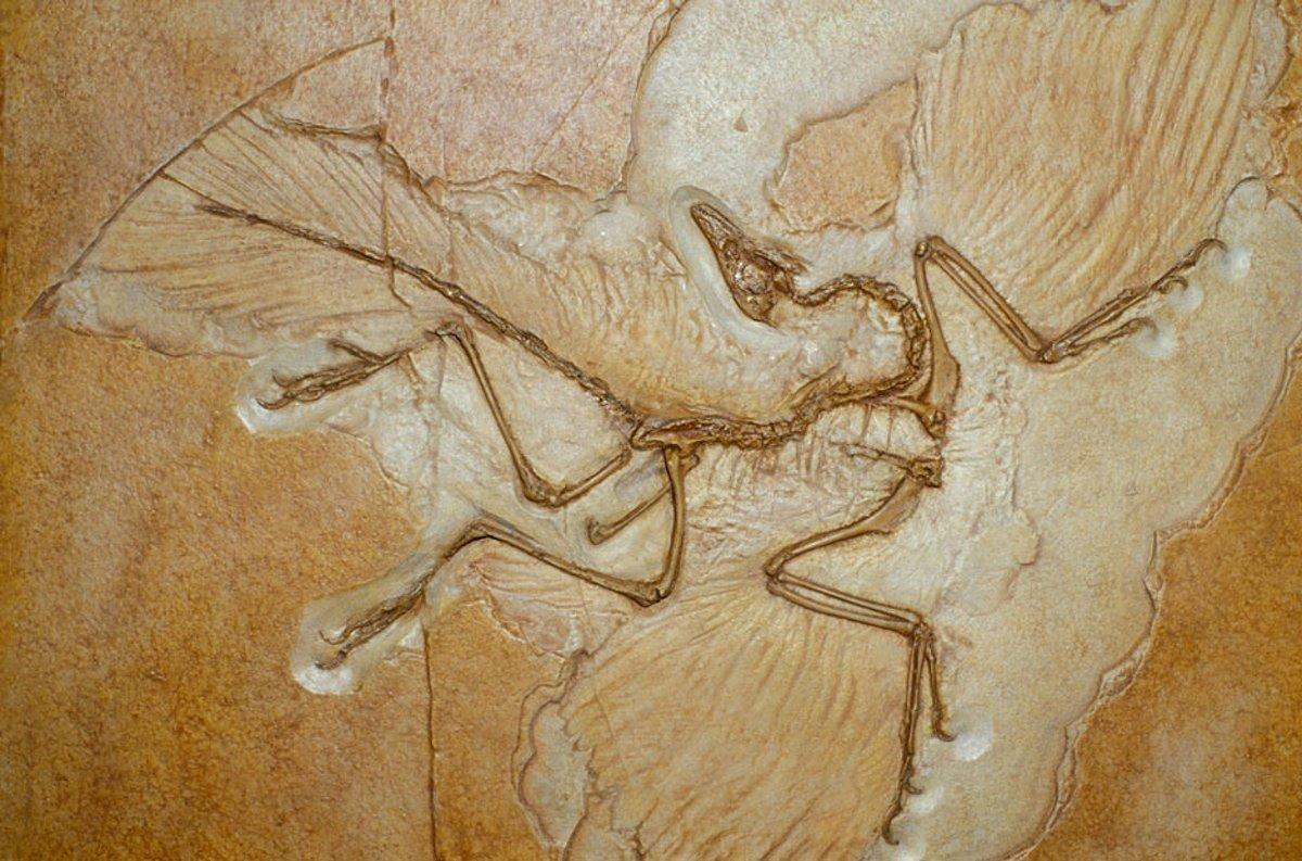 Archaeopteryx-fossil-001-ojqgikhr5m.jpg
