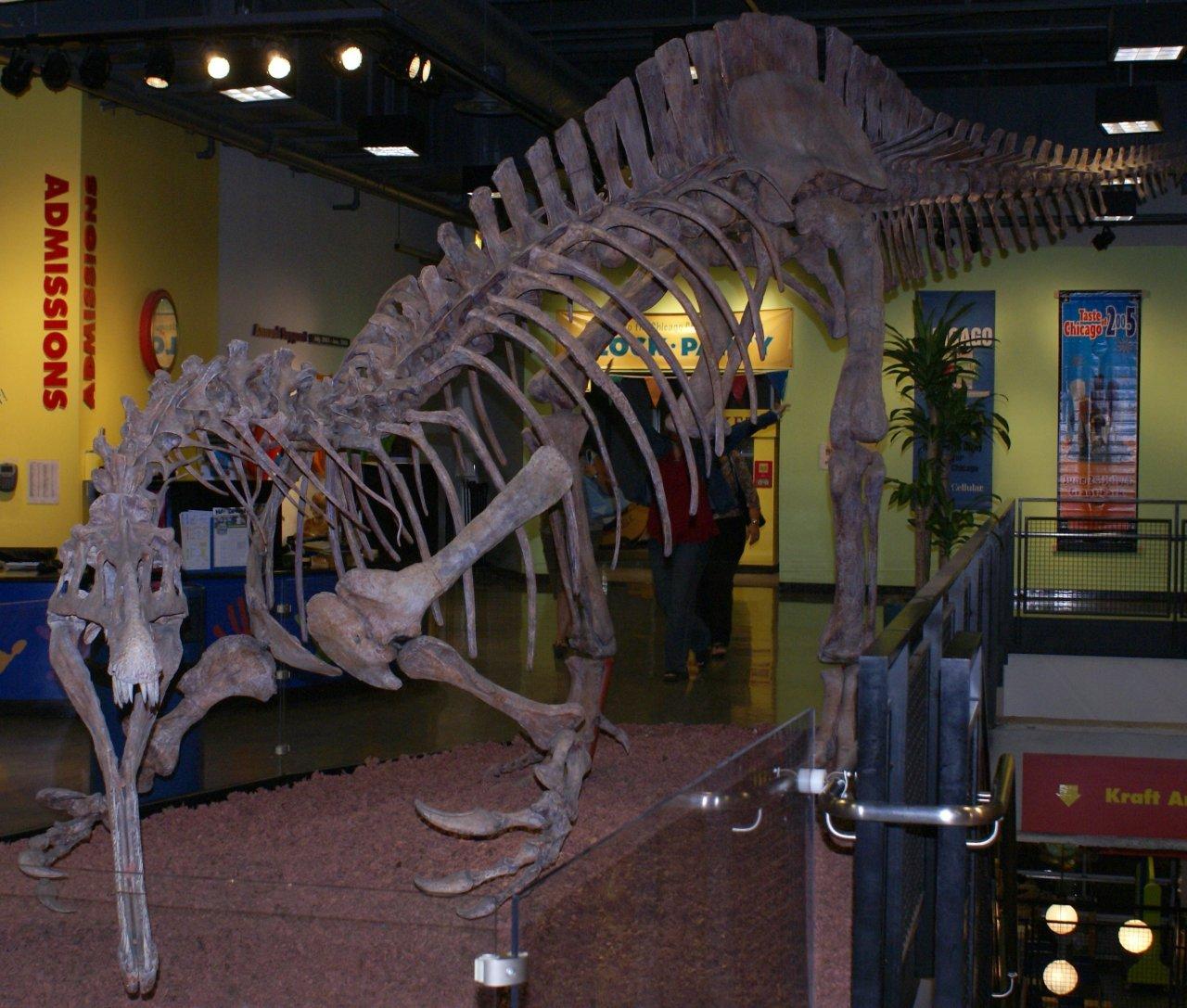 Suchomimus_skeleton-gil3ggu5a5.jpg