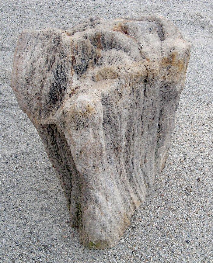 Fossil Bone Of Petrified Wood Dinosaur Home