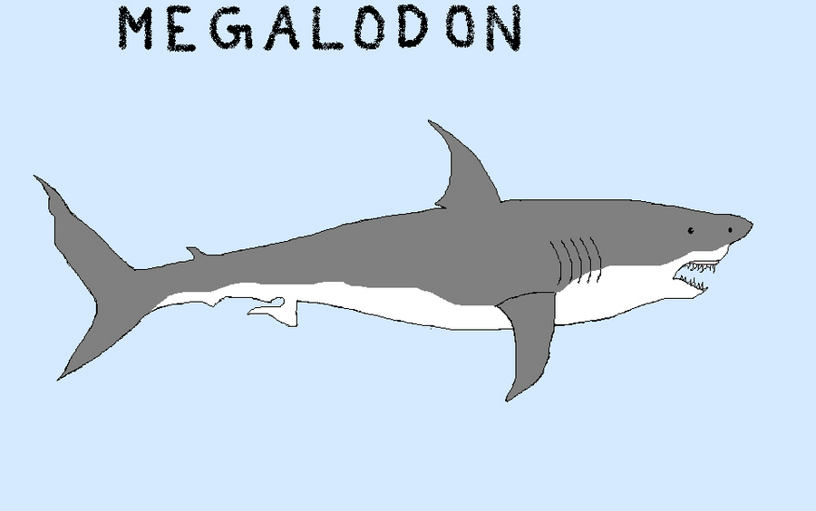 Megalodon MsPaint | Dinosaur Home
