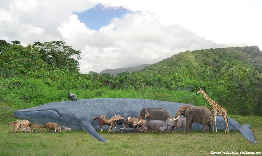 Largest Animals That Have Ever Lived. 1. Amphicoelias ... - photo#22