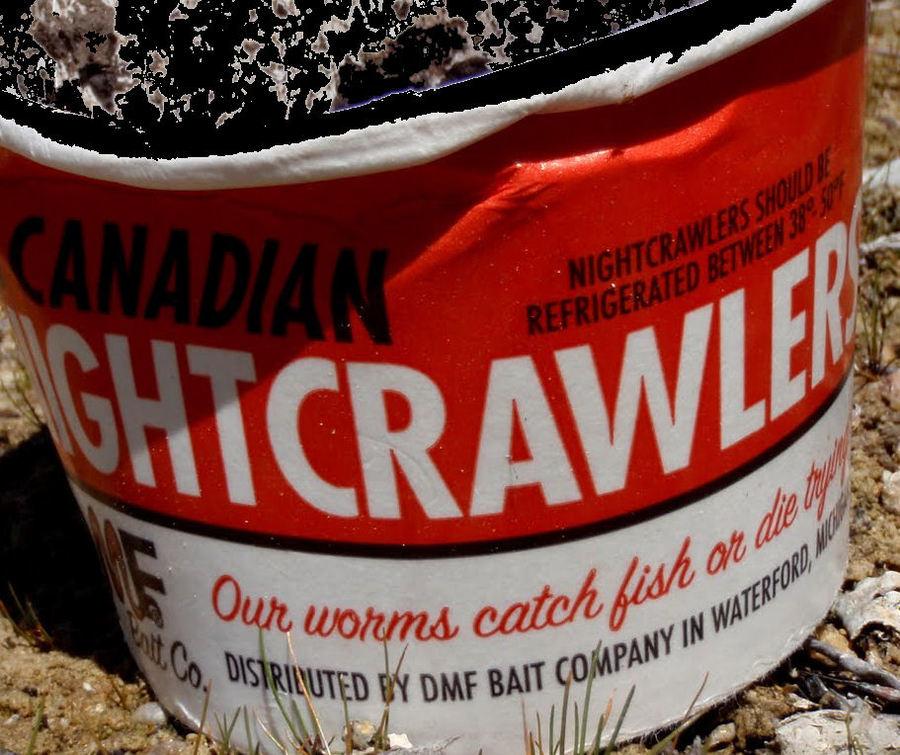 Nightcrawlers And Worms   Fishing Talks