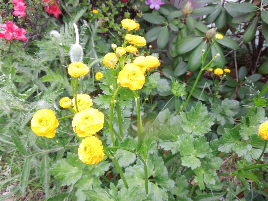 Small yellow flower flowers forums small yellow flower cgaidula 3 years ago mightylinksfo