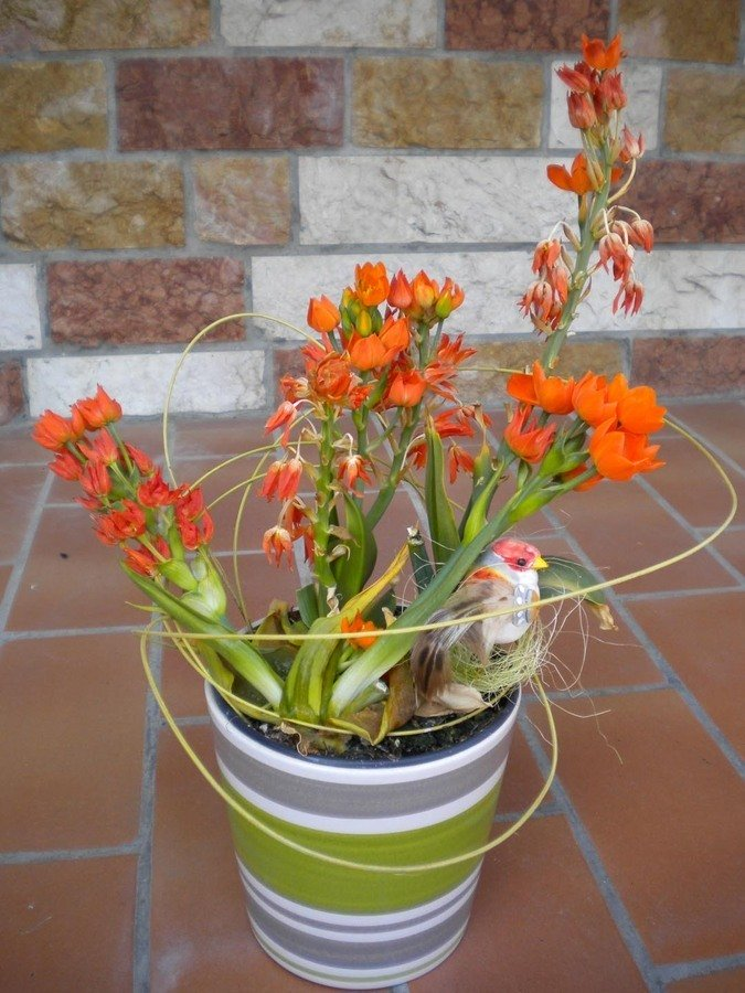 Which Plant Is It   Orange Blossoms  Long Stalk