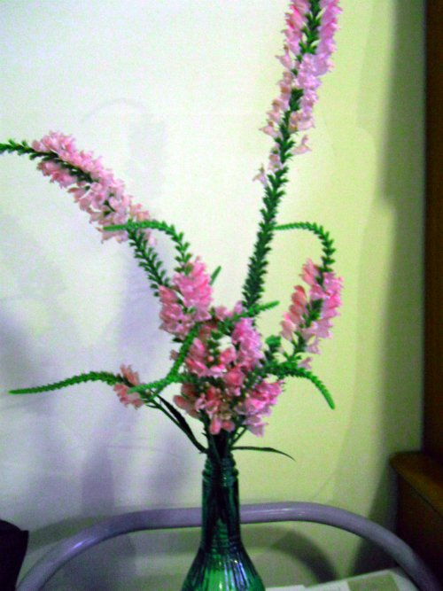 Can you identify tall spiky plant with pink bell like flowers from tall dark green plant with square stems and long serrated widely spaced opposite leaves blooms in august in zone 7 mightylinksfo