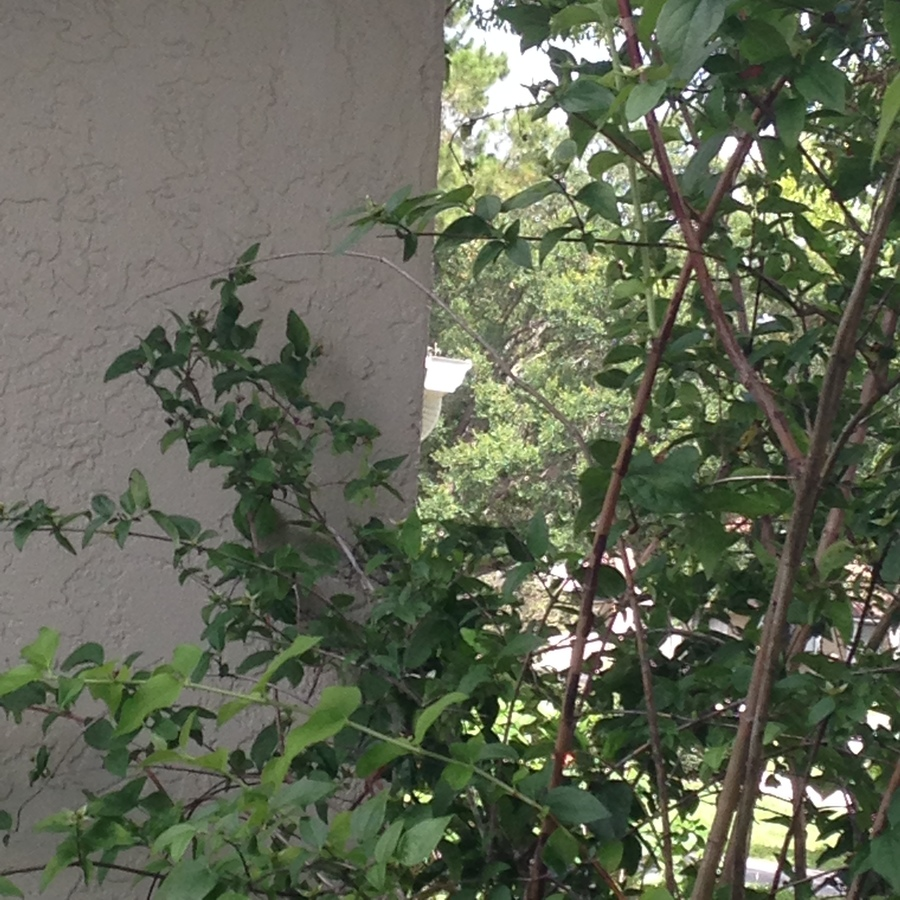 Tall plant white flowers flowers forums tall plant white flowers nel 2 years ago mightylinksfo
