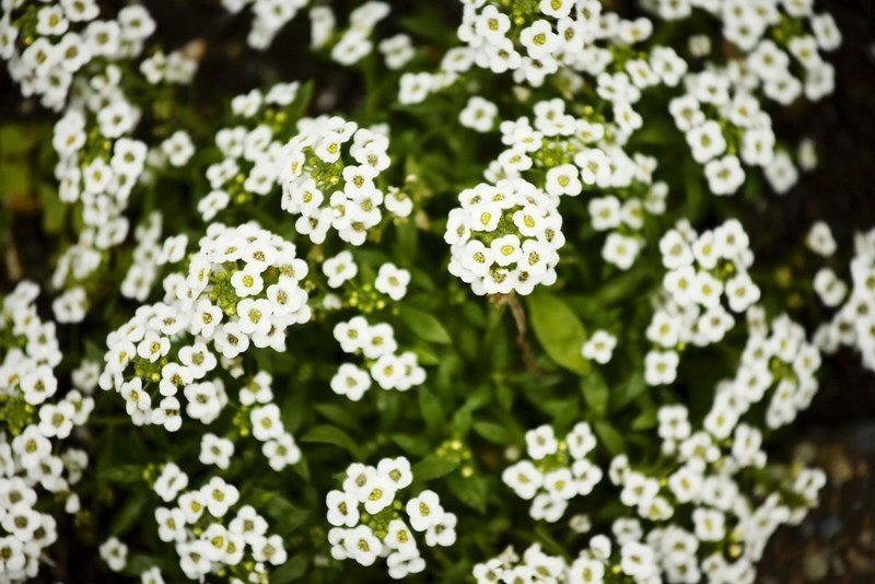 Small White Flower Flowers Forums