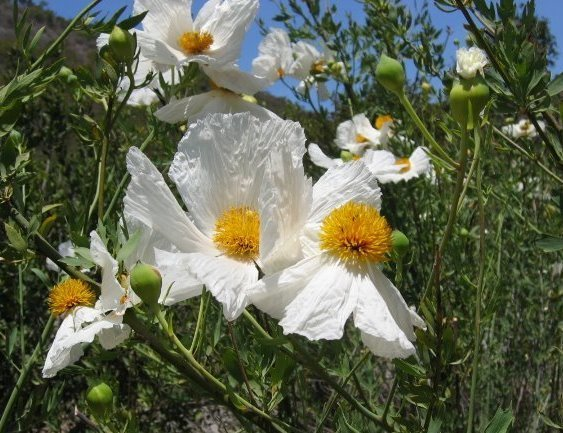 This flower has wide white pedals and yellow orange flowers in the this flower has wide white pedals and yellow orange flowers in the middle mightylinksfo