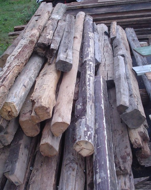 Recently Harvested Red Oak And Pre Blight American